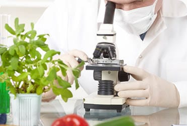 Researcher working in food lab looking in microscope
